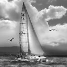 Bird Watch Sail by linaji