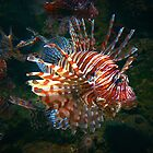 """A Lion Fish That Glows"" by franticflagwave"