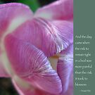 Pink Tulip Bud with Anais Nin Quote by Heidi Hermes