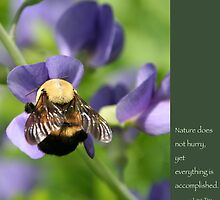 Bumble Bee on Baptista: Lao Tzu quote by Heidi Hermes