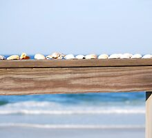 She Sell Sea Shells Down By the Sea Shore by Lisa6Ann110