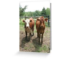 We're Vegetarians, How About You? Greeting Card