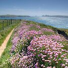 Pembrokeshire Coastal Path by Bob Culshaw