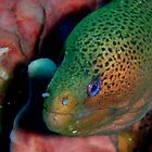Stunning Morey Eel by Richard Shakenovsky