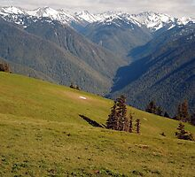 View from Hurricane Ridge, Olympic National Park by Olga Zvereva