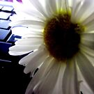 Lonesome Daisy by ibetannerz84