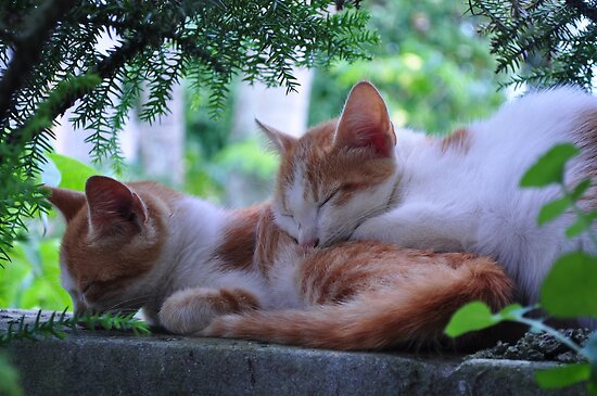 Sleeping Cats by Jinny Chataroo