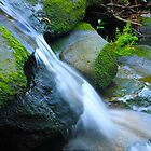 Stream - Allenby Park, NSW by bhooper