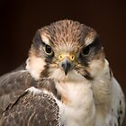 Kestral portrait by ArtforARMS