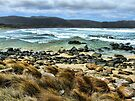 Wild sea Bruny island Tasmania by julie anne  grattan