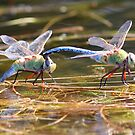 Darner Love: Teamwork by Wolf Read