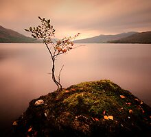 One tree.... against the elements... by David Mould
