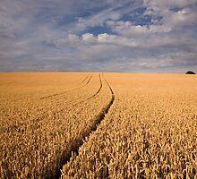 Field of Wheat by philipjamestoy