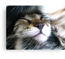 Snuggly Canvas Print