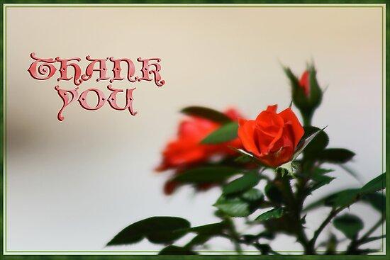 Thank You Rose Card by Corri Gryting Gutzman