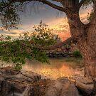 Through the Trees by Bob Larson