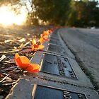 Remembering the Fallen, Albury by Ashlee Betteridge