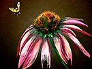 Flowers...The Bee and the Flower (Coneflower) by © Janis Zroback