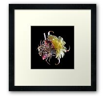 Cactus Flower LP Framed Print