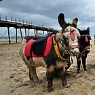 Donkeys on Saltbun beach by robwhitehead