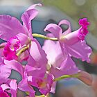 Mauve Orchid by Coloursofnature