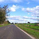 Ruta Argentina by DCFotos