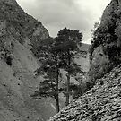 The Upper Reaches by EvilTwin