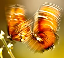 butterflies :01 by chaitanya thakur