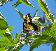 Fluttering By Butterflies by WalnutHill