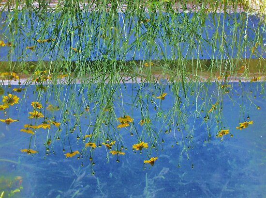 Irrigation Reflection...When Your World Is Upside Down by trueblvr
