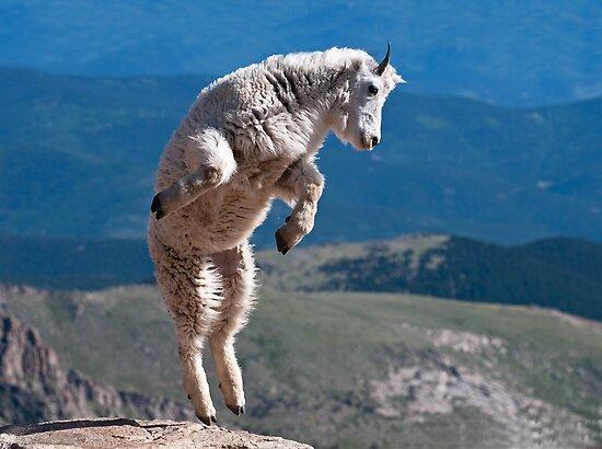 Jump! by Gary Lengyel