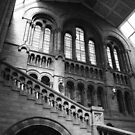 natural history museum by purpleminx