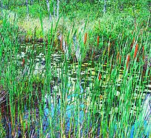 Cattails Abound by linmarie
