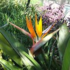 Bird of Paradise by Rosie Brown