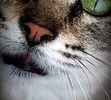 Beautiful Green Eyed Cat by AkaiAkuma80