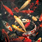 Gaggle of Koi by Keith Stephens