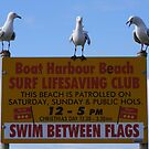 The Surf Lifesaving Club. Sea-gull gathering.  by Esther's Art and Photography