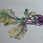 Kohlrabi - German Turnip by Michelle De Salis