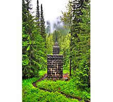 Pillars in the forest Photographic Print