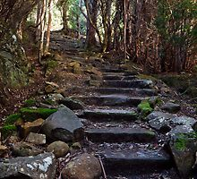 Springs Track on Mount Wellington by Chris Cobern