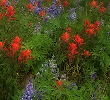 Paintbrush and Lupine by Steve  Taylor