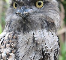 Tawny Frogmouth by DutchLumix