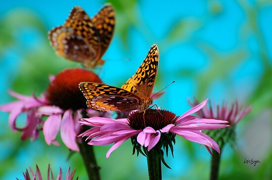BFF Best Friend Fritillaries  by Lois  Bryan