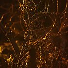 Sunlit Twigs in Surrey Hills by Sunnymede