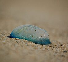 Man o War by AnnGossen