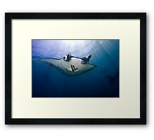 Bathing In Sunlight Framed Print