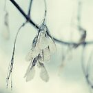 Winter Blues by Sarah Moore