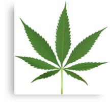 Cannabis leaf vector Canvas Print