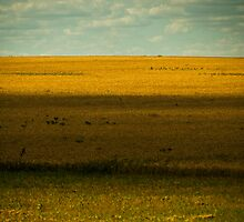 Prairie by Mary Ann Reilly