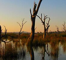 Morning shadows and dead Trees by Chris Chalk